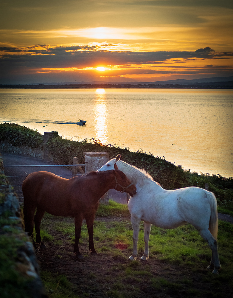 Nels Ambrose - Ring, County Waterford - We Love Ireland